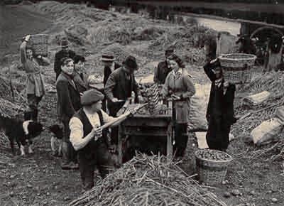 Old Doncaster: Norton Priory Potato Pickers